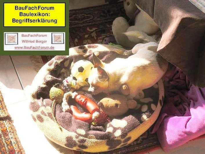 Chihuahua Freund Kamerad Dog Helfer Www Baufachforum De Baufachforum Seepark Pfullendorf Chihuahua Als Hund Chihuahua Hunde Tiere
