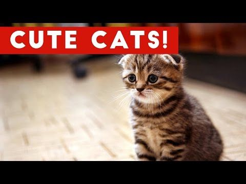 Cutest Cats Compilation 2017 | Best Cute Cat Videos Ever https://www.youtube.com/watch?v=rNSnfXl1ZjU