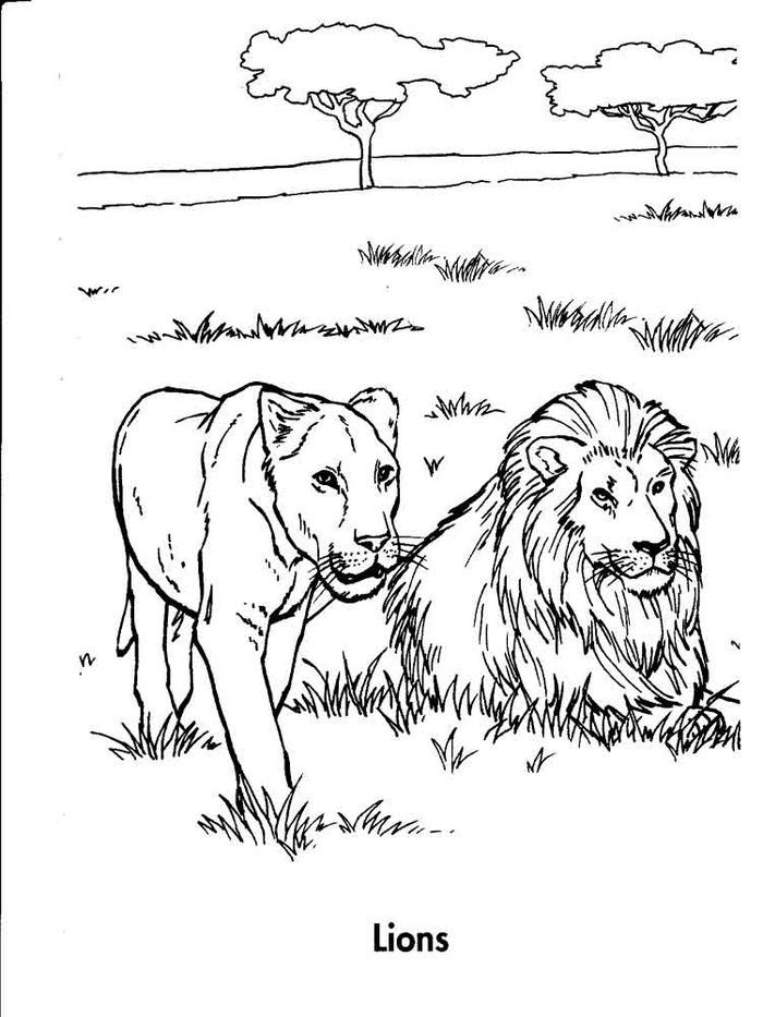Library Lion Coloring Pages Lion Coloring Pages Zoo Coloring Pages Cartoon Lion