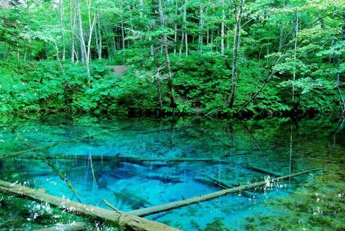 一度は目にしたい。幻想的な色彩に圧倒される「神の子池」   キナリノ