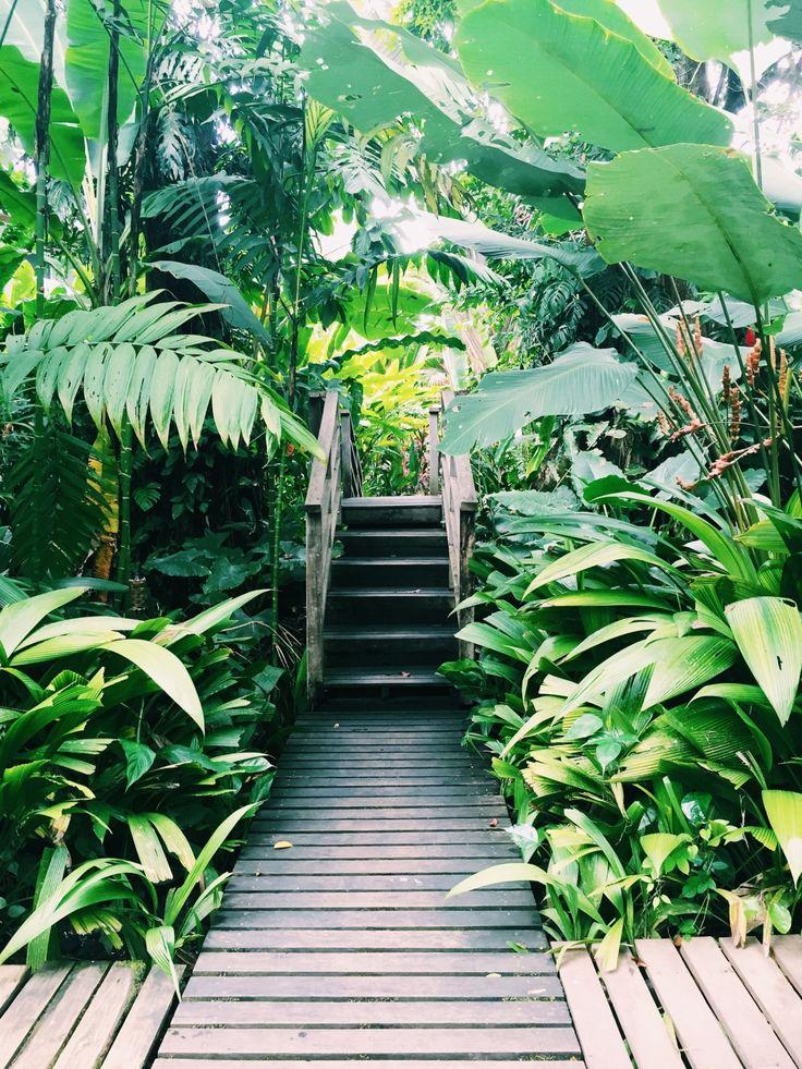 - Merry Danamere - wooden deck and bridge in a tropical garden. huge leaves. ponte e pavimento in legno in un giardino tropicale. foglie enormi. #tropicalGarden