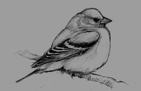 """You want to start by """"freeze-framing"""" a mental image of your bird. Don't worry about anatomy, accuracy, species, or making a pretty drawing."""
