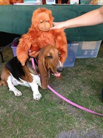 The Orangutan Project (TOP) -- Gold Coast Pet Expo event to raise awareness for the Endangered Orangutan. Here's a sweet basset hound getting up close and personal with the orangutans.