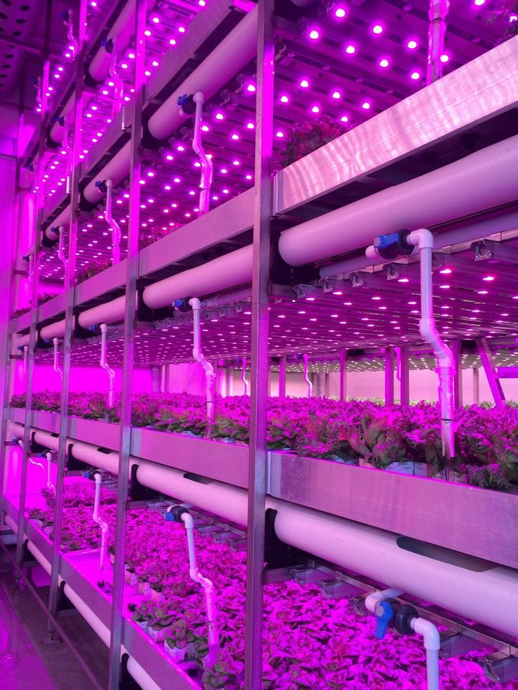 """Vertical farming grows food faster without sunlight, less soil, and right in a city. """"The salad greens are raised in such immaculate conditions, there is no need to wash the leaves before sampling"""""""