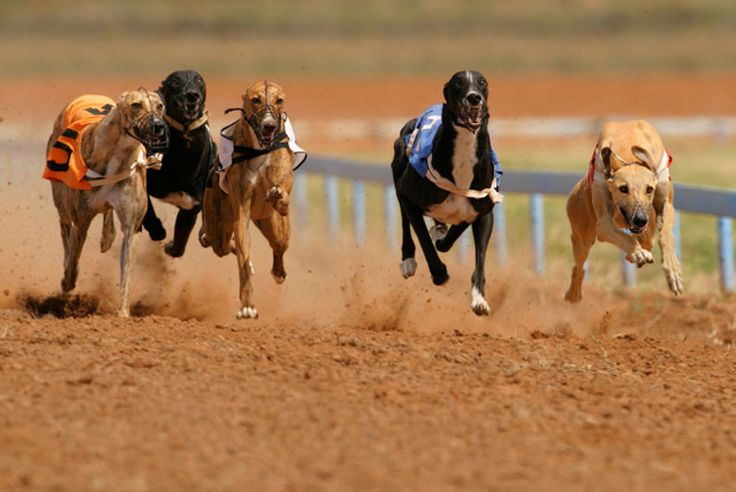2-Course Meal, Wine & Dog Racing
