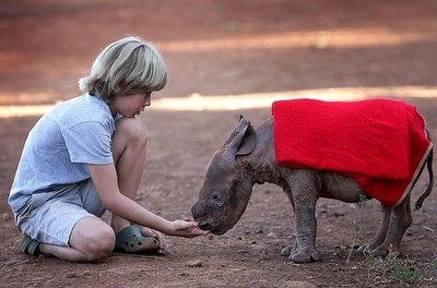 Taking my kids one day! This beautiful baby rhino is Maalim, he was found in Kenya's Tsavo National Park. The David Sheldrick Wildlife Trust is now taking care of him, they hope to release him back into the wild once he can fend for himself. His red blanket is very chic! Perfect for the well-dressed rhino.
