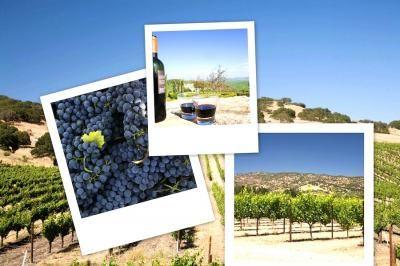Najlepsze lokalne wina - gdzie ich szukać?