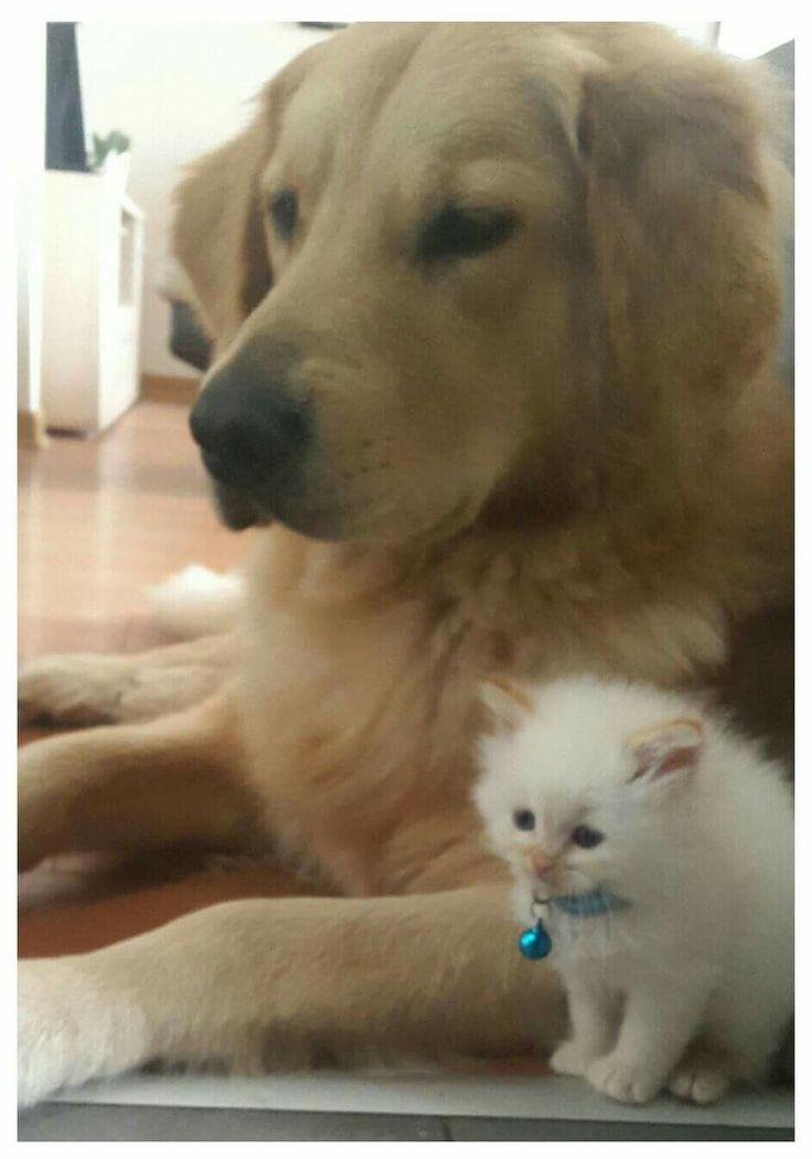 Como Padre e hijo.