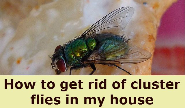 best 20 killing house flies ideas on pinterest. Black Bedroom Furniture Sets. Home Design Ideas