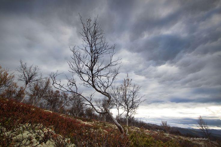 Rondane national park ,Otta ,Norway
