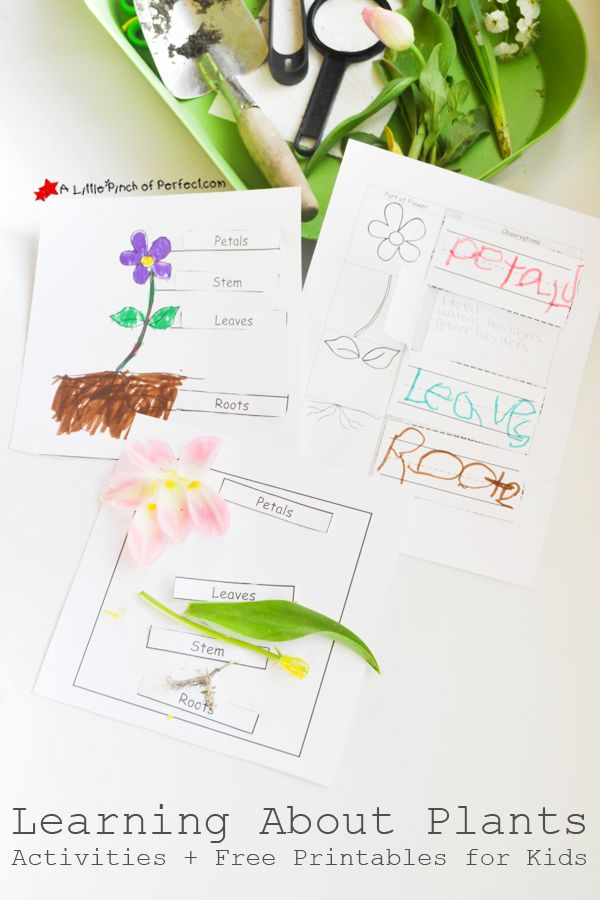 Learning About Plants: Activities and Free Printables for Kids (Writing, Coloring, Cut & Glue, Labeling)