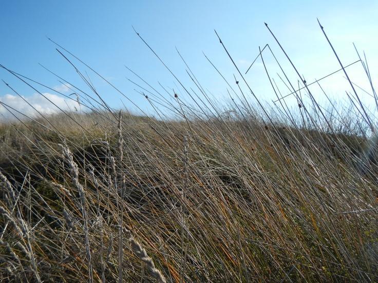 Walking through the dunes Papamoa Beach