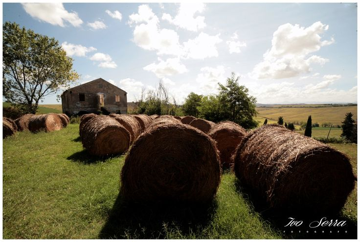 Balle di fieno nella campagna / Have you ever seen so much hay?