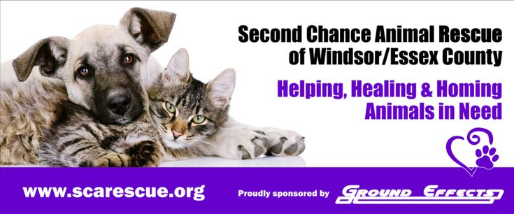 Dogs for Adoption at Second Chance Animal Rescue Windsor - Essex County
