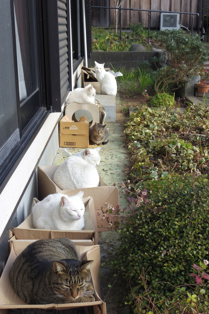 The Box Brigade... Putting out a dry box for an outdoor cat, I assume they are stray, is the least a person could do.  I have a box shelter wrapped in plastic under my front porch next to the house.  Shelter for anyone who wants it stuck outside.  I keep clean towels inside the box.