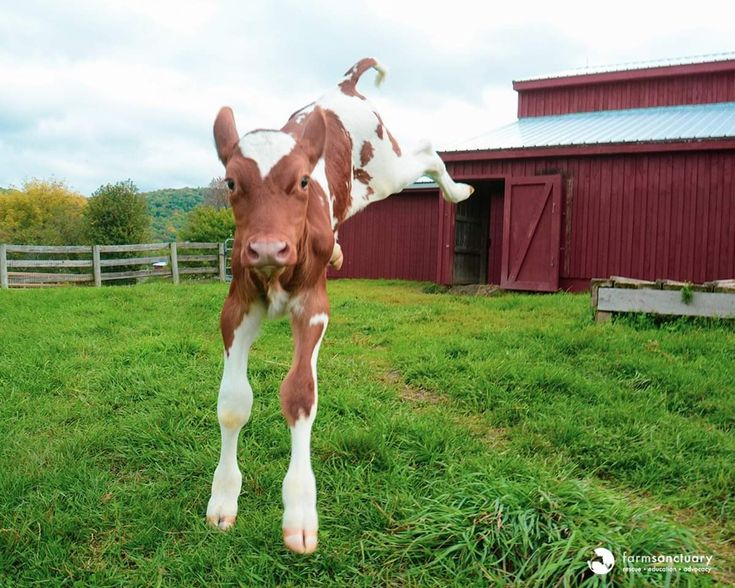 12+ Ima survivor donkey and farm animal sanctuary images