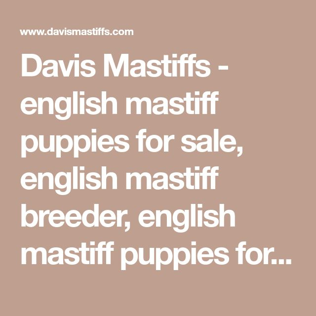 Davis Mastiffs - english mastiff puppies for sale, english mastiff breeder, english mastiff puppies for sale in texas