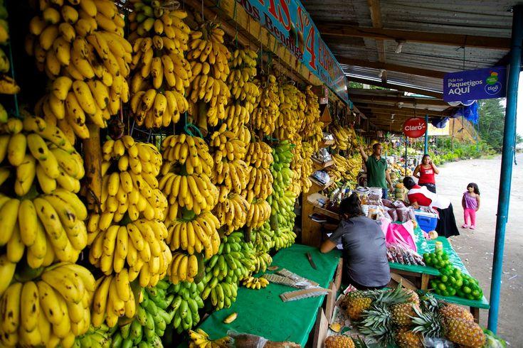 En San Pedro Sula Honduras, la clima es muy caliente y la gentes es muy divertida. En San Pedro Sula hay deliciosos mercados de frutas. Durante mi visité a la mercados de frutas, compré mucho plátanos y manzanas y peras y naranjas.
