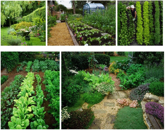 Permaculture gardening ideas pinterest for Permaculture garden designs