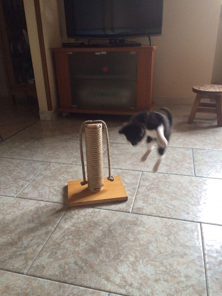 La mia Cleopatra prova a volare