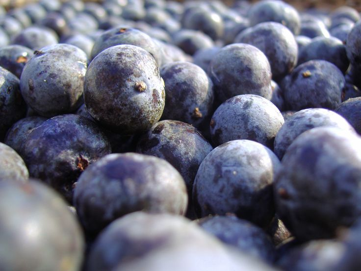 Acai works within our FAB products to combat free radicals.