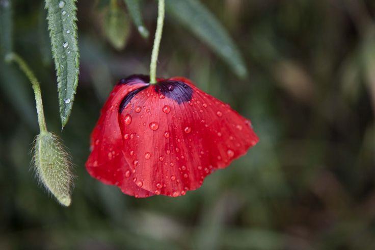 Le parapluie rouge | The red umbrella