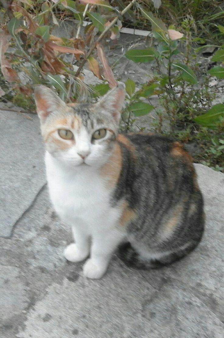 Mi chiamo Milly sono una gattina di campagna
