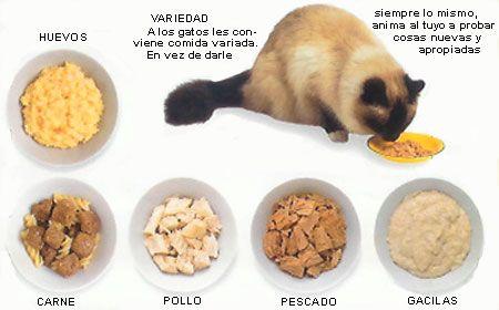 Alimentación del gato, comida de gatos, dieta mascotas en Amimascota