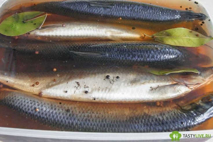 Селедка домашнего посола | home salted herring recipe