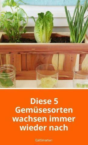 Diese 5 Gemüsesorten wachsen immer wieder nach – Silvia Rennebaum