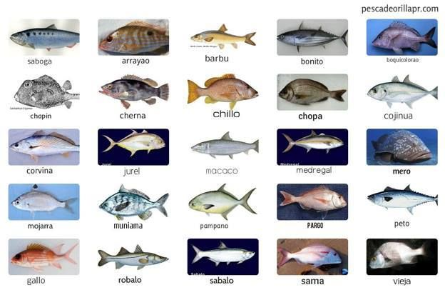 17 best images about game fish species on pinterest red for Types of red fish