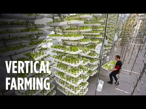 This Farm of the Future Uses No Soil and 95% Less Water | For Good News | Vertical Farming