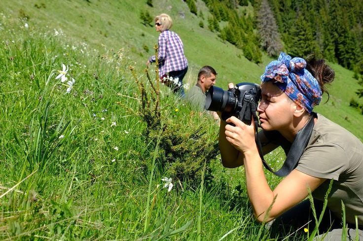 Daffodils Glade - Rodnei Mountains
