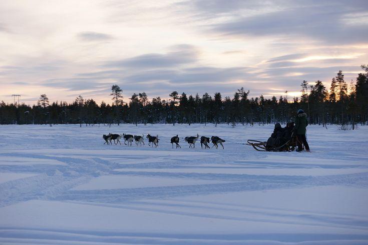 #Winterurlaub #Winterferien #Schweden #Lappland #Schwedischlappland #lapland #Schlittenhunde #Hundeschlitten ##testedbyloopingmagazin