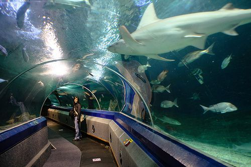 Underwater World Mooloolaba | Underwater World, Mooloolaba, Sunshine Coast - Australia