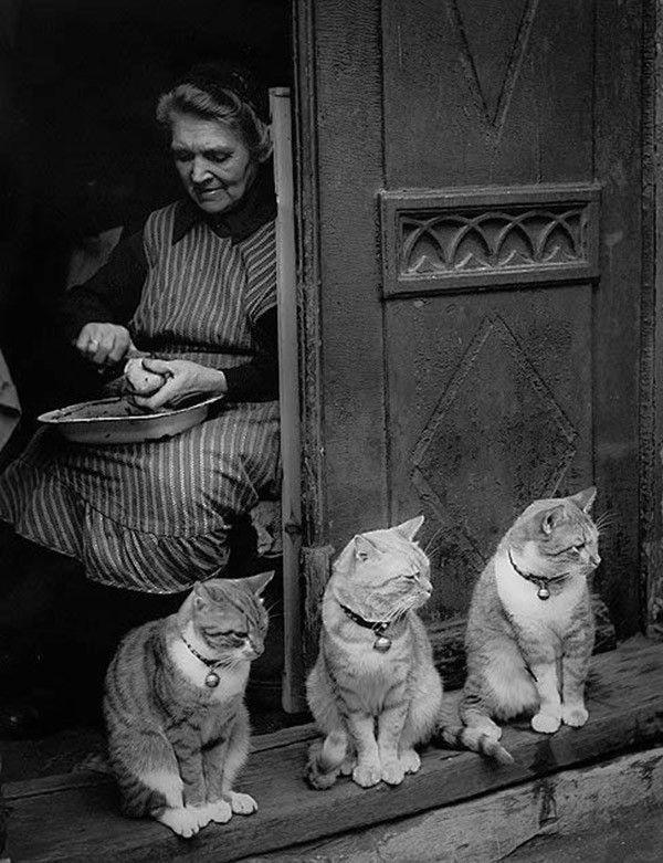 они, черно белое фото кошек и людей паучка