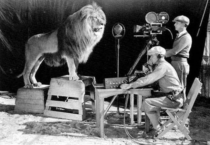 Η ηχογράφηση της φωνής του λιονταριού που πρωταγωνιστεί για την εταιρία MGM