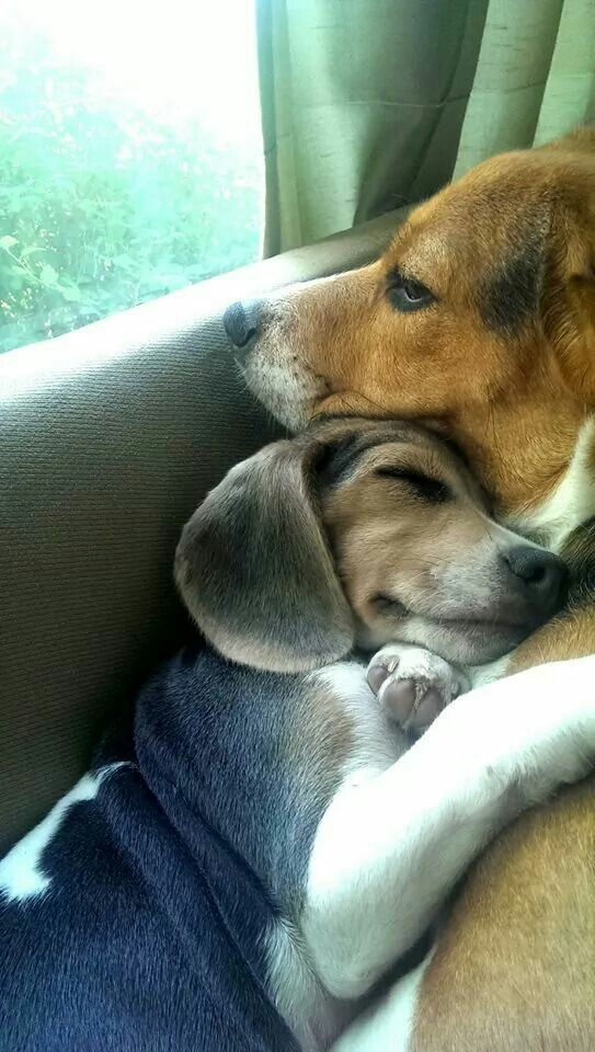 Best friends . . . So sweet!