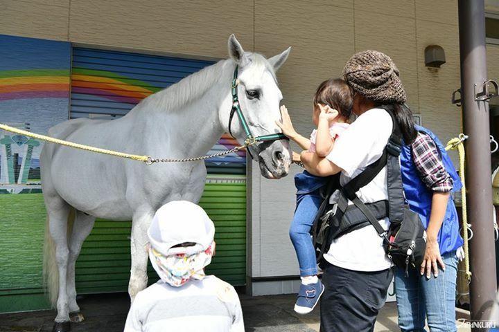Ride a horse at Japan's Tokyo Derby! #japan #derby #JRA #japankuru #tokyo #japanderby #tokyotravel #horseracing #amusement #entertainment #horserace #japanhorses #東京競馬場 #競馬 #競馬場 #東京観光 #馬 #東京 #スポーツ #エンターテイメント