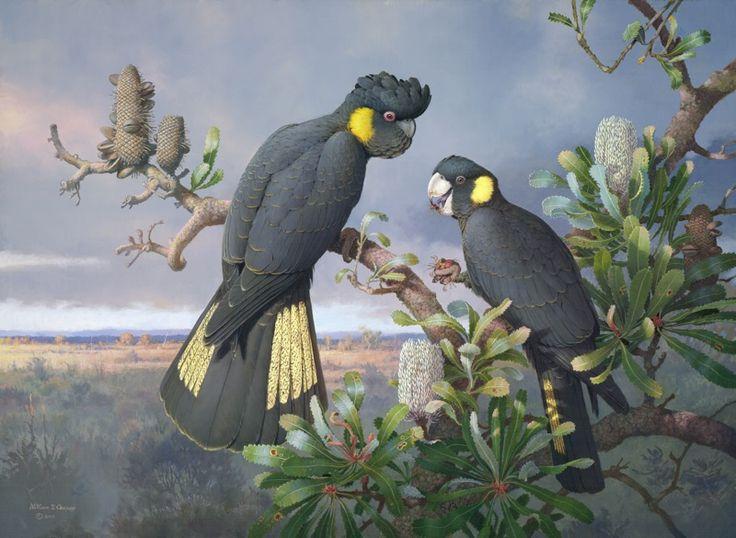 William T Cooper: Morning On The Moor - an amazing Australian wildlife Illustrator