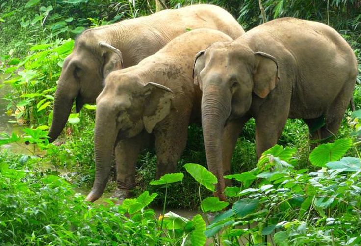 How to interact ethically with elephants in Thailand  Read more: http://www.lonelyplanet.com/asia/travel-tips-and-articles/how-to-interact-ethically-with-elephants-in-thailand#ixzz3JYbqf0pt