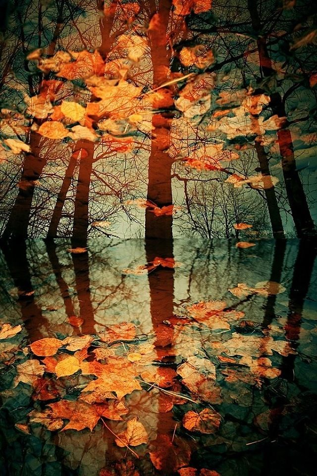 Autumn Colours by Victor Eredel: Water Reflection, Fall Leaves, Autumn Reflection, Autumnleaves, Autumn Leaves, Autumn Fall, Fall Harvest, Fall Trees, Autumn Photography