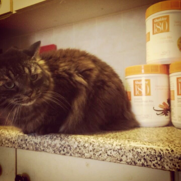 Boog is a Shaklee cat