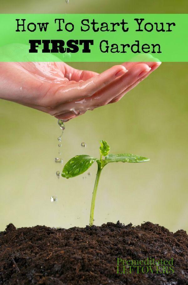 Best 25 Gardening For Beginners Ideas On Pinterest Vegetable Garden For Beginners Beginner