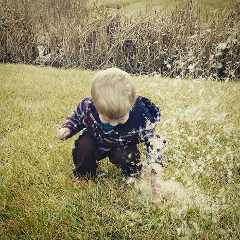 #fall #toddler #photography #cattails