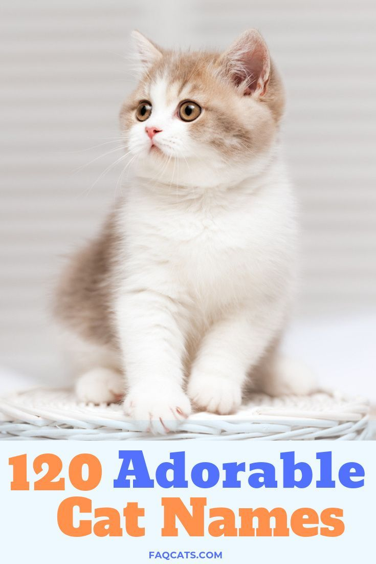 Pin On Kitten Names