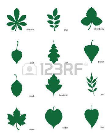 20 Diferentes hojas de arboles