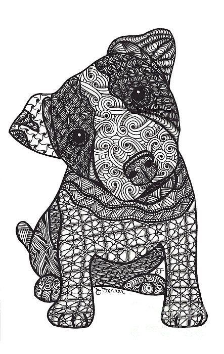 Crazy Jack Jack Russell Terrier