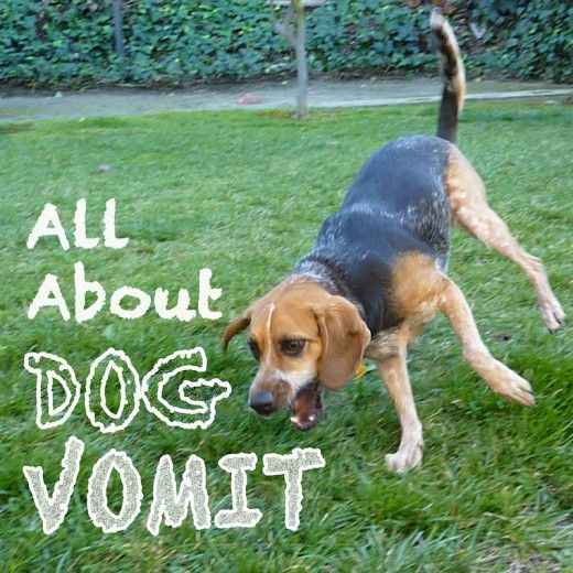 All About Dog Vomit - why is my dog throwing up