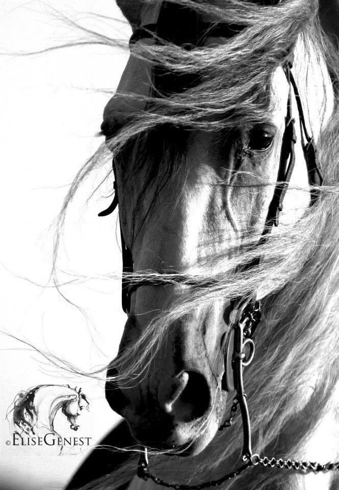 Les 59 meilleures images du tableau cheval sur pinterest for Utilisation du white spirit